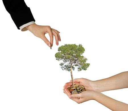 planting a tree: growng �rbol de pila de monedas Foto de archivo