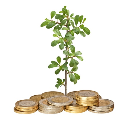 ecosavy: Seedling growing from coins