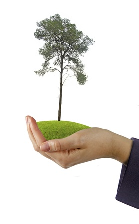 tree in hand Stock Photo - 16573962