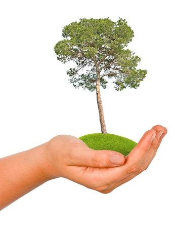 tree in hand Stock Photo - 16676276