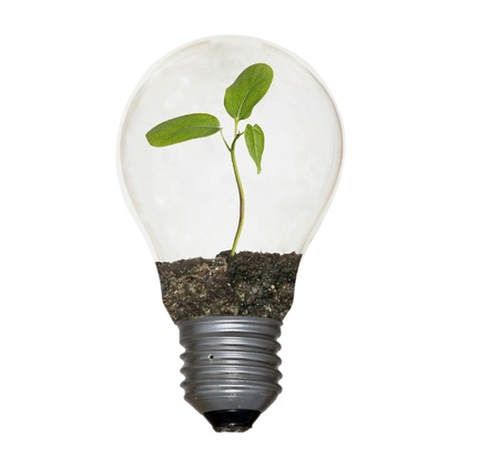 Incandescent light bulb with a plant as the filament  photo