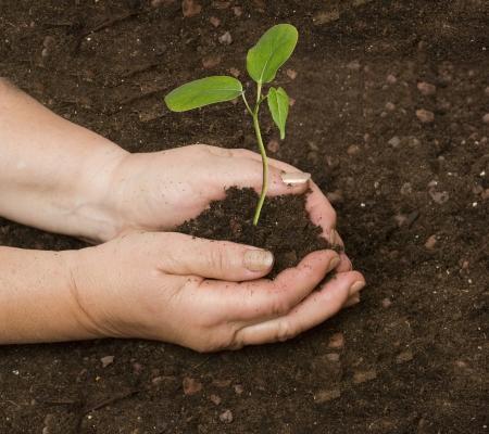 Planting a sapling Stock Photo - 16759634