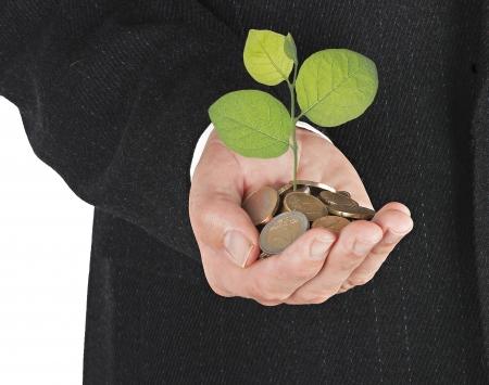 sembrando un arbol: Invertir para negocio verde Foto de archivo