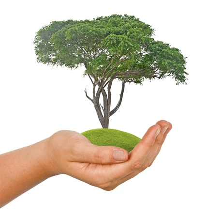 tree in hand Stock Photo - 17366678