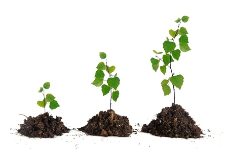 growing: Saplings on white background