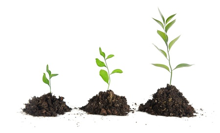 grow up: Saplings on white background