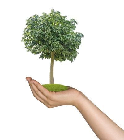 tree in hands Stock Photo - 17781519