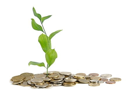 subsidy: Sapling growing from coins