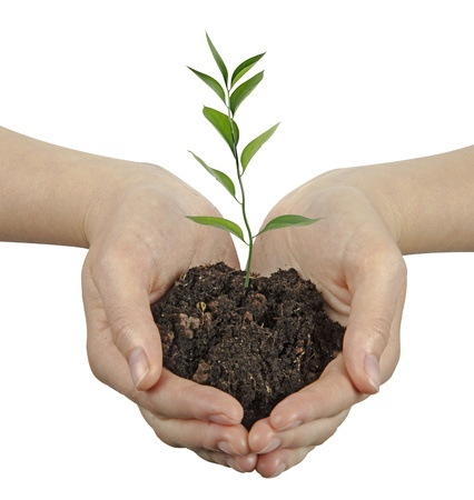 ecosavy: plant in hands Stock Photo