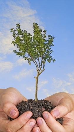 tree in hands Stock Photo - 18262919
