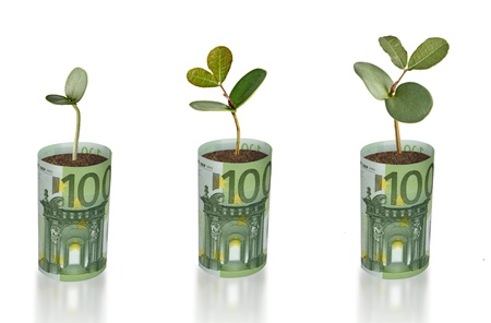 pot of money: Saplings growing from euro banknots