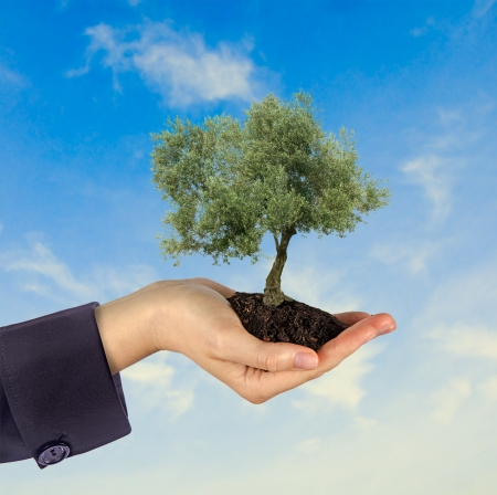 ecological problem: Olive tree in hand as a gift