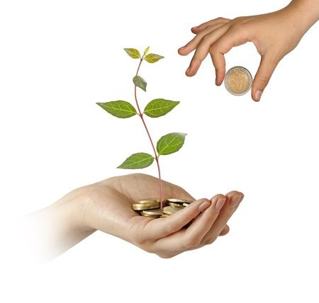 fondos negocios: Invertir para negocio verde Foto de archivo