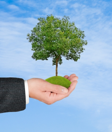 environmental protection: tree in hand
