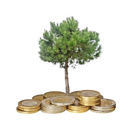 ecosavy: Pine tree growing from pile of coins Stock Photo