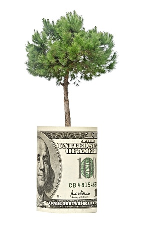 Pine tree  growing from dollar bill photo