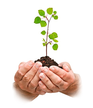 ecosavy: sapling in hands