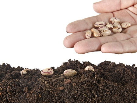 seeding: Seeding