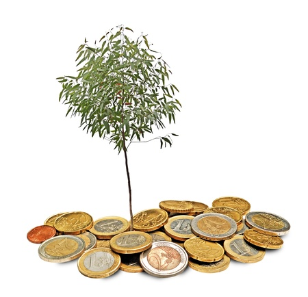 Eucalyptus tree growing from pile of coins photo