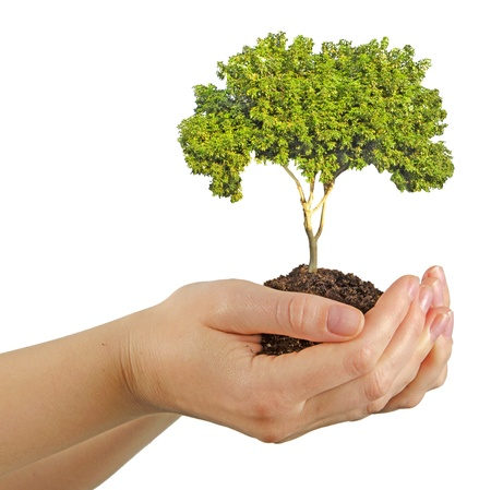 carbon footprint:  tree in hands