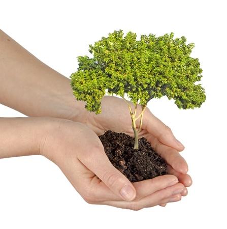 tree in hands Stock Photo - 21345214
