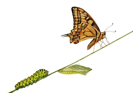 Close-up van rups, pop en swallowtail vlinder