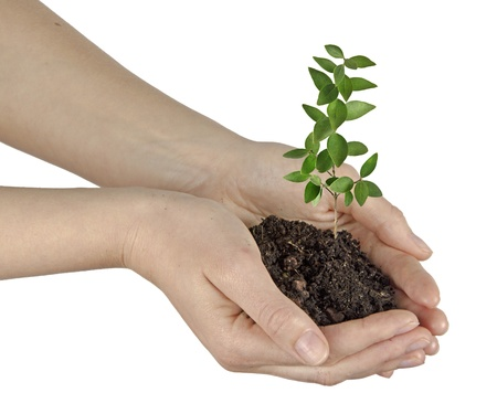 ecosavy: Sapling in hands Stock Photo