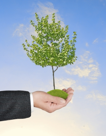 tree in hand Stock Photo - 21346218
