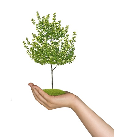 tree in hand Stock Photo - 21613680