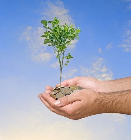citrus tree: Investment to agriculture Stock Photo