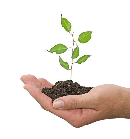 ecosavy: sapling in hand Stock Photo