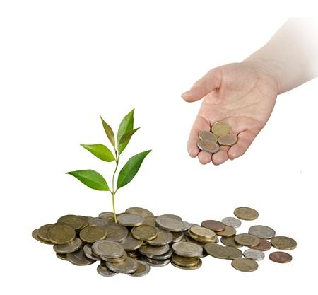plantar árbol: La inversi?n de las empresas verdes Foto de archivo