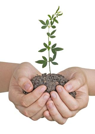 ecosavy: plant in hands Stock Photo