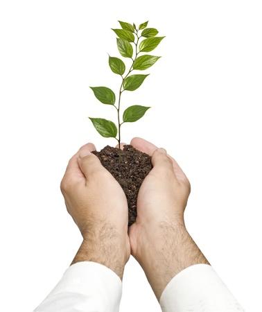 ecosavy: sapling in hands