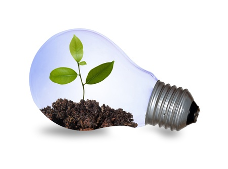 incandescent: Incandescent light bulb with a plant  Stock Photo