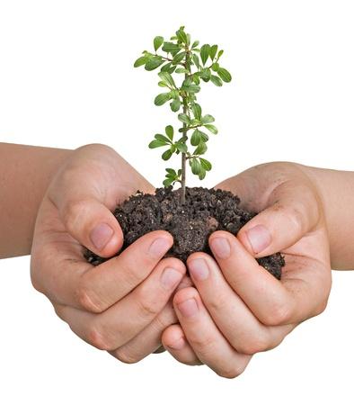 ecosavy: plant in hand