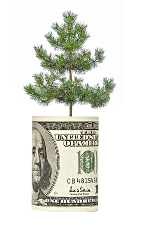 pot of money: Pine tree  growing from dollar bill Stock Photo