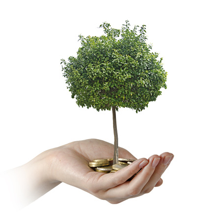 tree planting: Investment to agriculture Stock Photo