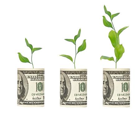 offset up:  saplings growing from dollar bill