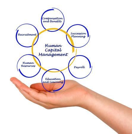 Diagram of Human Capital Management photo