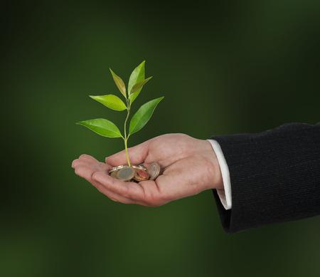 sembrando un arbol: La inversi�n de las empresas verdes