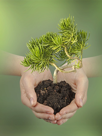 ecosavy: Plant in hands