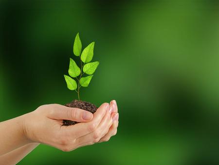 plantando arbol: Sapling en manos Foto de archivo
