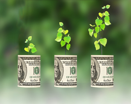 sapling growing from dollar bill photo
