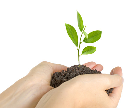 Tree growing from soil photo