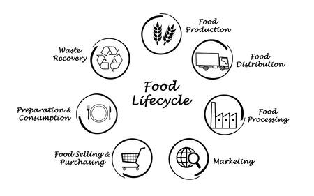 Food lifecycle photo