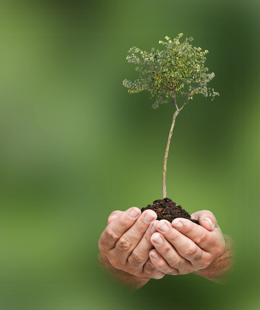 ecosavy: tree in hands