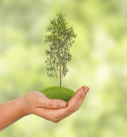 ecosavy: tree in hand