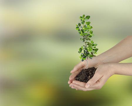 ecosavy: Sapling in hands Stock Photo