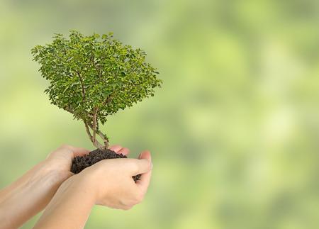 Vijgenboom in handen